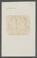 Cleodora spec. - - Print - Iconographia Zoologica - Special Collections University of Amsterdam - UBAINV0274 080 07 0011.tif