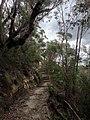 Cliff Top Track - panoramio (3).jpg