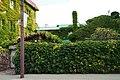 Clione dori Abashiri02s3.jpg