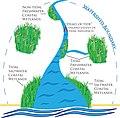 Coastal wetlands - EPA illustration.jpg