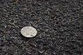 Coin (42022587511).jpg