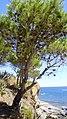 Colera - panoramio (4).jpg