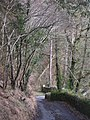 Colliery Lane - geograph.org.uk - 716762.jpg