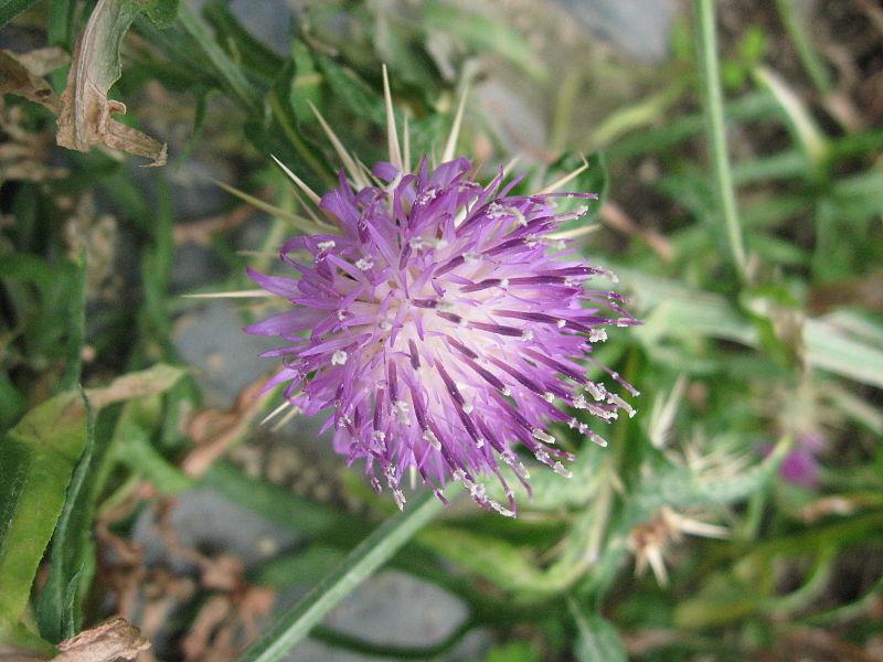 File:Conservatoire botanique brest (5).JPG