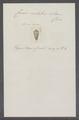 Conus coelatus - - Print - Iconographia Zoologica - Special Collections University of Amsterdam - UBAINV0274 086 02 0013.tif