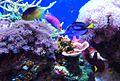 Coral tank.jpg