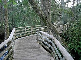 Corkscrew Swamp Sanctuary - Image: Corkscrew Swamp