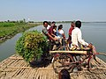 Country boat is the shortest way to communicate between Baronagar and Azimganj.jpg