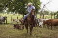 Cowhand Craig Bauer, atop his horse, Spaghetti, on the prowl for longhorn heifers and calves on branding day at the 1,800-acre Lonesome Pine Ranch, a working cattle ranch that is part of the Texas LCCN2014632579.tif