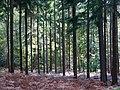Creech Woods - geograph.org.uk - 1025147.jpg
