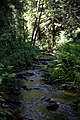 Creek in the forest.jpg