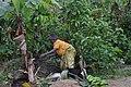 Cultivatrice camerounaise7.jpg