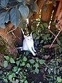 Cute cat relaxing under tree 01.jpg