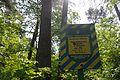 Dachnivka Forest 71-249-5013 SAM 9690.jpg
