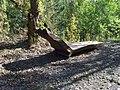 Dalejské údolí, dřevěné lehátko (01).jpg