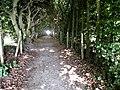 Dark natural corridor.jpg