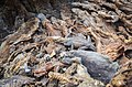 Dead organisms Abomey-Benin (6).jpg