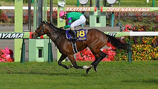 Dee Majesty Japanese-bred Thoroughbred racehorse