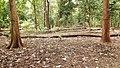 Deer Park @ Walayar - panoramio.jpg
