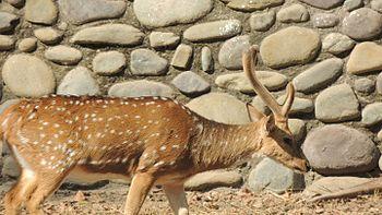 Deer Photography.jpg
