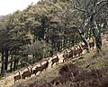 Deer in the Quarme valley - geograph.org.uk - 771962.jpg