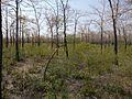 Dense forest in summer in Perambalur-Dist.jpg