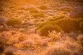 Desert sun (13496668933).jpg