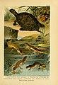 Deutschlands Amphibien und Reptilien (5981666859).jpg