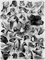 Die Gartenlaube (1858) b 685.jpg