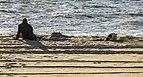 Digging dog Delaware seashore DE1.jpg
