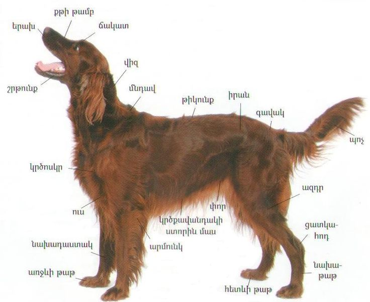 Female Dog Names Beginning With D