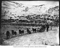 Dog team on the outskirts of Dawson, Yukon Territory, between 1895 and 1905 (AL+CA 2727).jpg