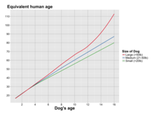 Graph Of Dog Age Versus Equivalent Human Grouped By Size