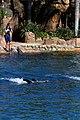 Dolphin Cove 60.jpg