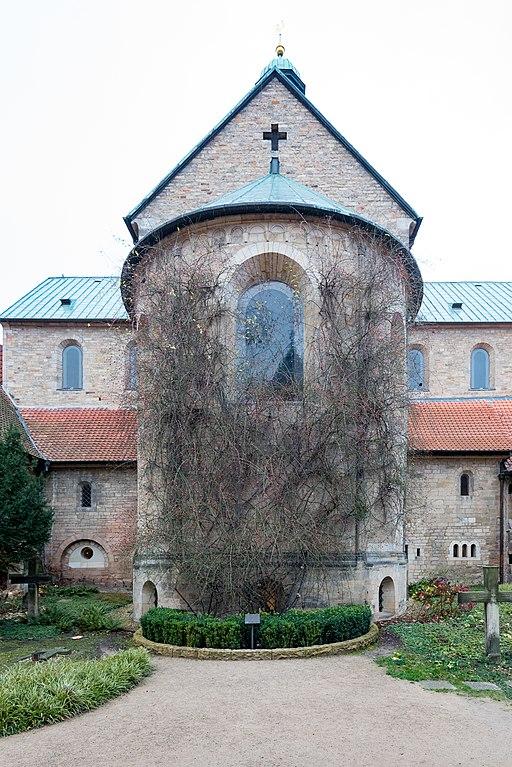 Domhof, Dom, 1000 jähriger Rosenstock Hildesheim 20171201 001