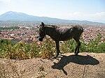 Donkey in Prizren.jpg