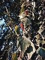 Drveće u parku Svetog Save u Nišu (12).jpg