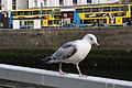 Dublin - Bird - 110507 182357.jpg