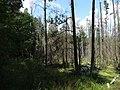 Dworczysko - panoramio (55).jpg