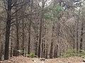ER102 754, 9100, Portugal - panoramio.jpg