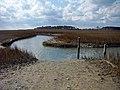Eastern Shore of Virginia National Wildlife Refuge, VA. Credit- USFWS (11804180236).jpg