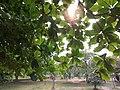 Eco park 11.jpg