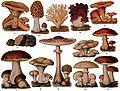 Edible Fungi.jpg