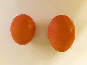 Yolk - Image: Egg and maxi egg 1