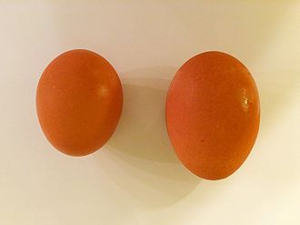 Yolk - Image: Egg and maxi egg 1