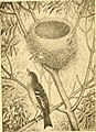 Egg check list and key to the nests and eggs of North American birds (1886) (14770729173).jpg