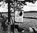 Eggholk, = Rugekasse. Knipan lägger ägg i dom . Egelatj 1948 - Norsk folkemuseum - NF.05116-125.jpg