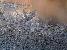 Afbeelding van ijsbloemen in de winter