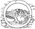 El Argar (enterramiento en tinaja).png