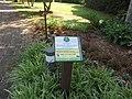 Elizabethan Gardens, Fort Raleigh National Historic Site, Manteo, Roanoke Island, North Carolina (14273807098).jpg